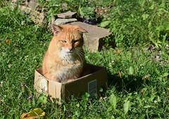 Boxed In (jmunt) Tags: cat stewartjcat