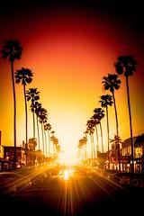 Newport Avenue Sunset (rogerbrownphoto) Tags: sunset sun evening coast ocean beach silhouette palmtrees trees waves sand oceanbeach sandiego california cali