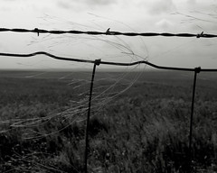 Grasses Caught In Fence (Photographs By Wade) Tags: foraker oklahoma fence barbedwirefence prairie prairielandscape