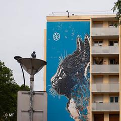 Le chasseur (MF[FR]) Tags: street art paris france ile de europe 13 cat chat pigeon oiseau bird samsung nx1