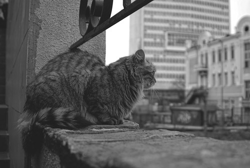 Владивосток. Арина Эртман.2008 (16) ©  arina.ertman