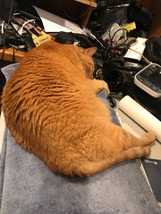 His girl went on a trip and now he's a lonely boy. (_BuBBy_) Tags: his girl went trip now he's lonely boy steve ginger cat orange red stripe striped stripey feline stevie