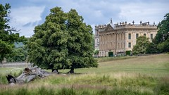 Chatsworth House (gavsidey) Tags: chatsworth new view derbyshire d500 ngc trees