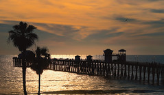 Paradise (charhedman) Tags: californiaroadtrip pier palmtrees sunset silhouettes sparkle seascape sky