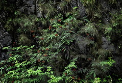 Tropical Illusion . . . (JLS Photography - Alaska) Tags: alaska alaskalandscape vegetation jlsphotographyalaska green plants tropical flora leaves growth art digitalmanipulation forest nature outdoor plant