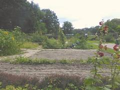 Forschergarten (thmlamp) Tags: 13505 13505berlintegel berlin gärtner insel inselgärtner inselgärtnerei scharfenberg schulfarminselscharfenberg tegel tegelersee gärtner inselgärtner inselgärtnerei