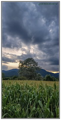 Il n'est point de bonheur sans nuage ! (jamesreed68) Tags: groupenuagesetciel alsace hautrhin berrwiller paysage nature ciel nuagesetciel nuages arbre maïs redmi