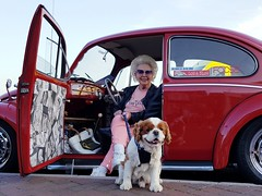 never too old to be cool (SCRIBE photography) Tags: uk england dorset poole vw volkswagen beetle classic portrait oldlady dog spaniel car