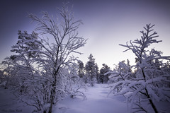 A path in the forest - Lapland - Finland (Elanor82) Tags: canon 5d usm lappi 1635 mk3 mark3 mrk3 wood trees winter light sunset white snow cold ice nature forest suomi finland frozen twilight lapland finlandia lapponia