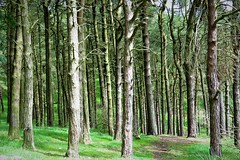 'Can't see the Wood for the Trees' - Taxal Moor, Goyt Valley, Peak District (HighPeak92) Tags: trees taxalmoor valleys goytvalley nationalparks peakdistrictnationalpark peakdistrict derbyshire canonpowershotsx700hs