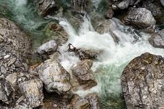 A7307663_s (AndiP66) Tags: felsenschlucht rockygorge schlucht canyon gorge breitach fluss river waterflows allgäu bavarianalps oberstdorf kleinwalsertal mittelberg vorarlberg austria österreich sony sonyalpha 7markiii 7iii 7m3 a7iii alpha ilce7m3 sonyfe24105mmf4goss sony24105mm 24105mm emount sel24105g andreaspeters