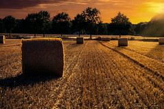 Strohballenfeld bei Heiligenrode (George Nevrela) Tags: balesofstraw harvest stroh ernte strohballen getreidefeld landscape landschaft sun fineart nevrela georgenevrela bremen stuhr heiligenrode
