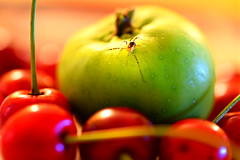 Red & Green (PentlandPirate of the North) Tags: hmm macromondays oppositecolours apple cherries spider complementarycolours