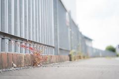 Hard place-03988 (toniertl) Tags: sonyfe50f18 toniphotoxoncouk townplants walkingthroughkidlington decoration dullday lenstest grey drab fencing tarmac street pavement gravel lowangle