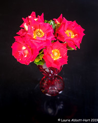 20190804A Rose Is a Rose29958-Edit (Laurie2123) Tags: ad200 fujixt2 fujinon1855mm laurieturnerphotography laurietakespics laurie2123 odc ourdailychallenge ketchupandmustardrose offcameraflash rose roses