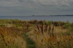 Hittarp view tonight (frankmh) Tags: landscape beach evening summer hittarp skåne sweden öresund denmark