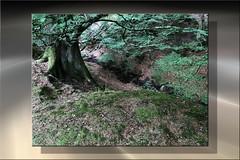 19-245 (lechecce) Tags: nature 2019 art2019 sharingart shockofthenew
