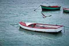 jlvill 213  Voy a visitar al vecino. (jlvill) Tags: agua rio mar barcas aves gaviotas