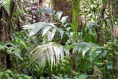 Cloud Forest - Costa Rica