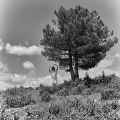 incantation I (the ripped bystander) Tags: blackwhite causse méjean female incantation tree dance