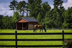 Beaufort County (N.C) '19 (R24KBerg Photos) Tags: beaufortcounty scenic landscape summer 2019 canon northcarolina rural nc easternnorthcarolina south shed horse farm animal equine highway171 nc171