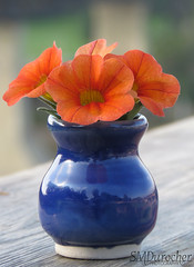 20190805 Complementary Colors BlueOrange2 c (SMD Pics) Tags: macromonday complementarycolors blue orange millionbells vase flowers macro