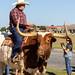 Cowboy riding at Longhorn Steer