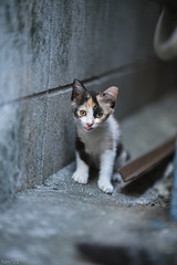 猫 (fumi*23) Tags: ilce7rm3 sony sel85f18 85mm fe85mmf18 a7r3 animal alley cat gato kitty kitten emount katze neko ねこ 猫 ソニー