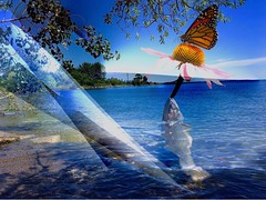 Something fishy (i_kaya@rogers.com) Tags: art photo photograph photography lake canada ontario fish trees flower butterfly