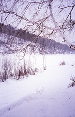 Brevno outtakes (Igor Verkhovskiy) Tags: 35mm film fujifilm yashicat4 yashica filmcollective analogcamera analogfeatures filmforlife filmnotdead filmcommunity naturallight russian nature siberia krasnoyarsk snowy river birch branch