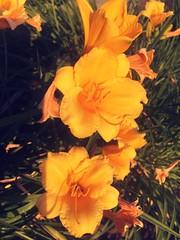 Happy Macro Monday's (Mr. Happy Face - Peace :)) Tags: macromondays theme floral flower art2019