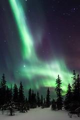 Aurora Borealis in Swedish Lappland (bholmbom81) Tags: trees winter sky snow nature night stars sweden arctic kiruna auroraborealis phenomen bjornholmbom björnholmbom lappland