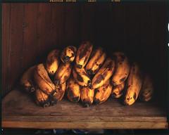 brown bananas (steve-jack) Tags: sinar p kodak aero ektar 178 f25 fuji velvia 100f expired film large format 4x5 5x4 tetenal e6 epson v500 brown flickrfriday