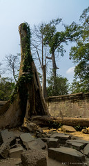Ta Prohm Temple (PVT Photography) Tags: trees history architecture temple cambodia historic siemreap angkor taprohm bayon angkorthom taprohmtemple siemreapprovince rajavihara រាជវិហារ pvtphotography ប្រាសាទតាព្រហ្ pvtinc prasattaprohm travel asian asia khmer hindu hinduism pvt prajnaparamita hindumythology khmerempire