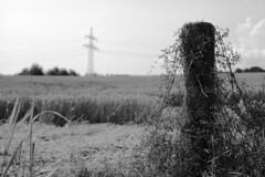 Summer time - harvest time (www.holgersbilderwelt.de) Tags: wheat grain highvoltage nature beautiful white light sky black landscape summer art germany europe plant outdoor monochrome fine botany flora lovely tranquility season culture rural countryside traditional perspective agriculture saxony tradition sachsen rustic schwarzweiss aperture