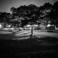 Sydney (Bill Thoo) Tags: sydney nsw newsouthwales australia kirribilli milsonspark night landscape city urban dark longexposure park tree backlight streetlights silhouette street film analog analogue filmcamera monochrome bnw bw blackandwhite blackandwhitefilm mediumformat mediumformatcamera mediumformatfilm 120 mediumformatfilmcamera 6x6 504 50mm hasselblad 500cm hasselblad500cm zeiss zeisscft504 ilford fp4 ilfordfp4 push2stops pushed2stops shadows