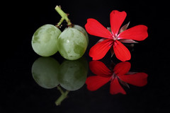 """Together - More fun! (Ageeth van Geest) Tags: composition food fruit macromondays complementair colours"""" complementarycolours stilllife redgreen grapes geranium reflections"""