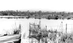 not a sound (the ripped bystander) Tags: blackwhite camargue swamp lake landscape