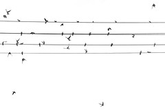 Sky-Lines (Black&Light Streetphotographie) Tags: mono monochrome sony streetshots streets streetshooting street schwarzweis streetphotographie sw sonya7rii sky himmel wow dof depthoffield tiefenschärfe nahaufnahme nature natur bw blackandwhite blackwhite bokeh bokehlicious blur