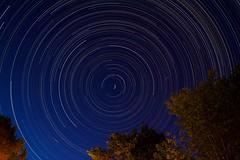 42/52 - Circumpolar (m4mboo) Tags: 52 52project arcachon blue circle circumpolaire light lightpainting night north sky star stars trails tree