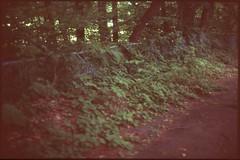 (✞bens▲n) Tags: pentax lx astia 100f at200 film analogue slide fence plants green 50mm f12