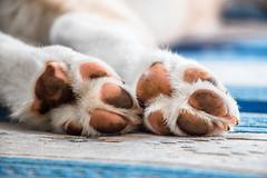 Dirty Paws (anlgngr7) Tags: canon eos 77d 18135mm is usm nano lens dog dogs paw paws dirty kirli patiler pati pençe köpekler köpek blue husky siberian wolf sibirya kurdu kurt puppy pup cub