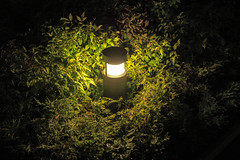 (garthim) Tags: olympus pen epm2 lumix panasonic 20mm japan tokyo nightvew