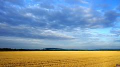 PAYSAGES DE PICARDIE 044 (aittouarsalain) Tags: picardie paysage landscape champ blé moisson nuages ciel aube aurore