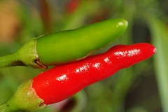 small..... but very hot chilli peppers   HMM ! (libra1054) Tags: macromondays complementarycolours redandgreen chilipeppers pimientos piments peperoncino hot piccante piquant food macro