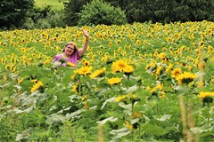 My Sunshine (Jan Nagalski) Tags: flower sunflower nature agriculture farm sunflowerfield summer yellow yellowflower spectacular amazing colorful hill woman smile wave trees westernmichigan yuba michigan jannagalski jannagal