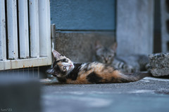 猫 (fumi*23) Tags: ilce7rm3 cat chat gato neko emount 85mm sel85f18 a7r3 animal ねこ 猫 ソニー
