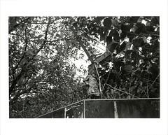 ilfordwarmtonefb_118 (蕭告 Cane pazzo) Tags: contaxt3 sonnar3528 kodak tmax400 tmy bw negative film tmaxdev19 黑白底片 暗房 手工放大 darkroom silvergelatinprint splitgradeprinting ilfordwarmtonefb epsonv600 taiwan