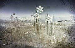 Purity (Ladmilla) Tags: art digital digitalart faeforest landscape flowers grass texturized sea sky daffodils purity sl secondlife nature