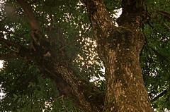 0655_2019.08.02 Leica Minilux zoom expired film 06-2018 Fujicolor C200 test Vilnius Lithuania (3) (nefotografas) Tags: 20190802 leicaminiluxzoom expiredfilm 062018 fujicolorc200 vilnius lithuania lenstest
